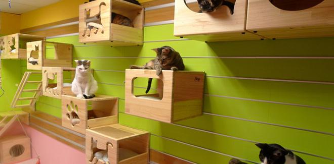 FOTOSPECIAL  Design voor katten   Kattenanaccessoires